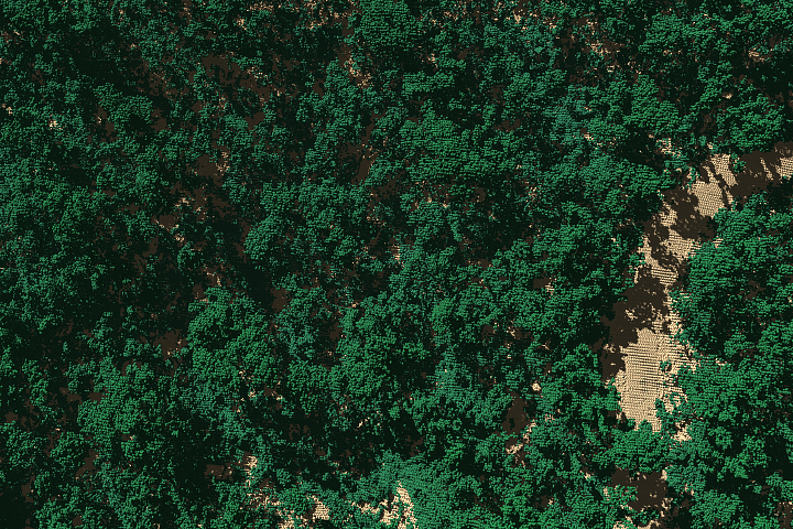 2018 airborne image of tree cover in a section of El Yunque National Forest in Puerto Rico