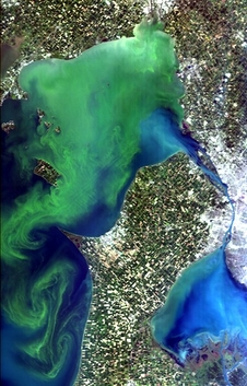 Hyperspectral Imager for the Coastal Ocean (HICO) image of a massive Microcystis bloom in western Lake Erie