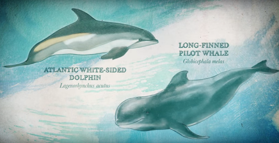 Image of Pilot Whale and White-Sided Dolphin