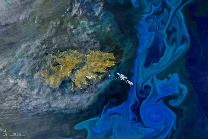 Aqua satellite image of phytoplankton bloom in the South Atlantic Ocean