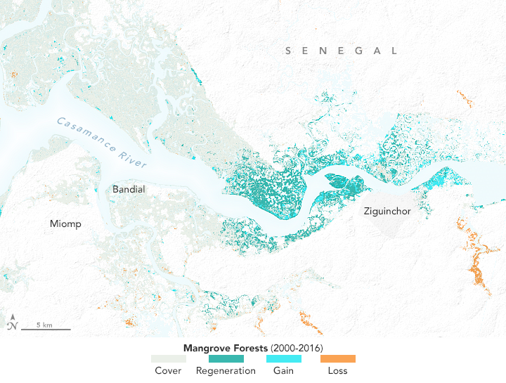 Map depicting how mangrove forests along the Cassamance River changed between 2000 and 2016