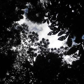 Photo of view of sky through tree canopy