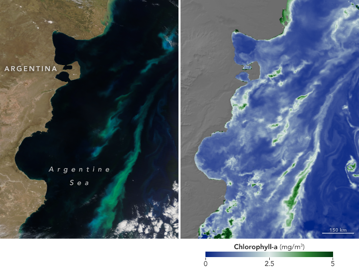 Split image: (L) Terra satellite image of phytoplankton bloom off Argentina (R) Terra image depicting observations of concentrations of chlorophyll-a