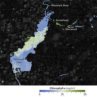 Map depicting chlorophyll-a levels in Wisconsin's Petenwell Lake