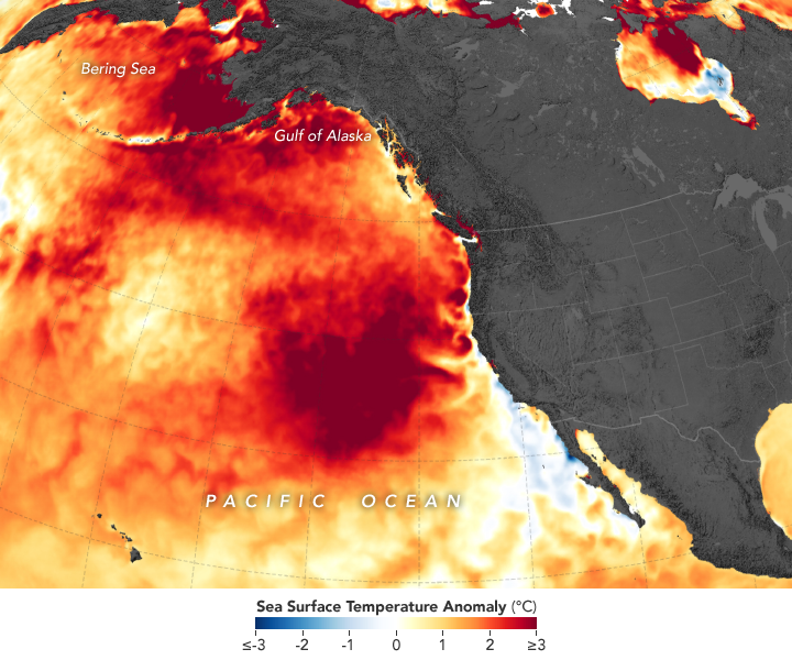 Map of Sea Surface Temperature Anomaly in norhteastern Pacific Ocean